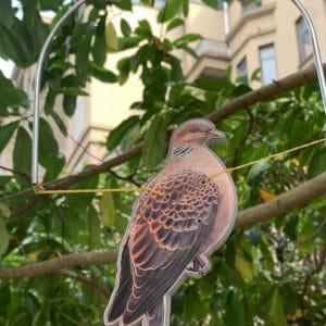 turtle dove slingshot target